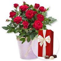 Image of Rote Rose im Topf und Belgische Pralinen