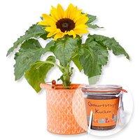 Sonnenblume im Zink-Topf und Kuchen im Glas Geburtstag