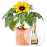 Sonnenblume im Zink-Topf und Freixenet Semi Seco