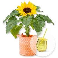Sonnenblume im Zink-Topf und Trinkglas mit Deckel