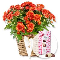 Orangefarbene Chrysantheme im Korb und Herz-Pralinen-Trio