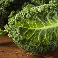 Kale 'Dwarf Green Curled' (Seeds)