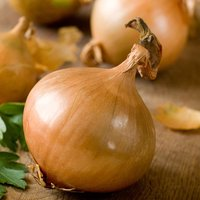 Onion 'Ailsa Craig' (Giant/Show Vegetable) (Seeds)