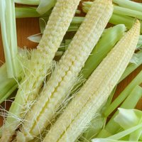 Sweetcorn 'Snobaby' (Seeds)