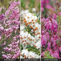 Heather Collection