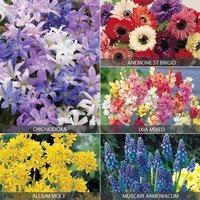 Bumper Spring Bulb Collection