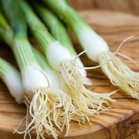 Spring Onion 'Performer' (Seeds)