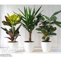 Scandi Houseplant Collection