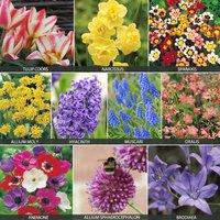 Bumper Bulb Bonanza Collection