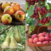 Fruit Tree Orchard Collection