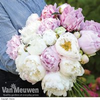Peony Scented Bouquet Mix?