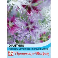 Dianthus Rainbow Loveliness Improved Mixed