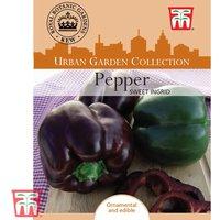 Sweet Pepper Ingrid - Kew Collection Seeds