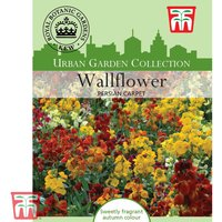 Wallflower Persian Carpet - Kew Collection Seeds