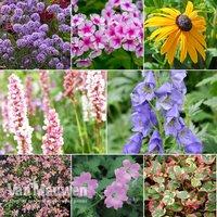 Perennial Summer Garden Collection