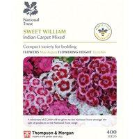 Dianthus barbatus Indian Carpet Mixed (National Trust)
