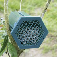 Insekten - Nistkasten Solitärbiene