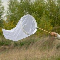Insekten - Vivara Dolden-Glockenblume 'Loddon Anna'
