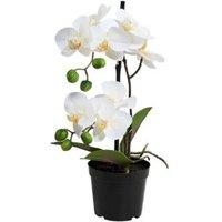 BUTLERS FLORISTA Orchidee im Topf 35 cm weiß