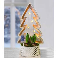 LED Weihnachtsbaum mit 2 blauen Hyazinthen