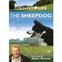 Country Life - The Sheep Dog