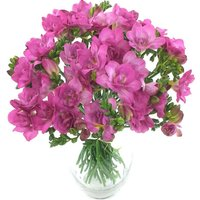 Irresistible Cerise 40 Freesia Bouquet