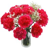 Hot Pink Carnations