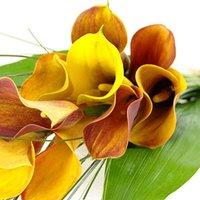 Mango Calla Lilies