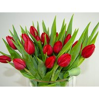 20 Red Tulips