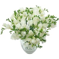 White Whispers 40 Freesia Bouquet