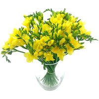 Splendour Yellow Freesia Bouquet