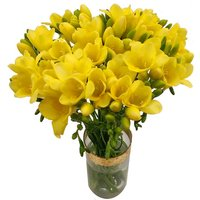 Yellow Freesia