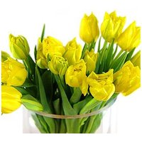 20 Yellow Tulips