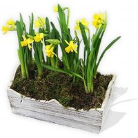 Basket of Daffodils