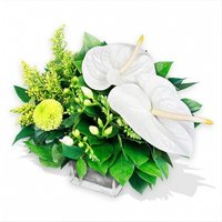 White Anthuriums and Freesias in a Vase