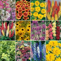 Complete Hardy Garden Perennial Collection - 24 x Plug Plants 346669