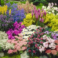 Lucky Dip - 3 Large Perennials in 3L Pots 433813