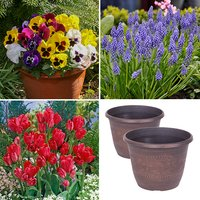 Pair of Decorative Planters with 12 x Pansy Jumbo Plugs and 25 x Spring Bulbs 437292