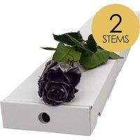2 Classic Black Roses