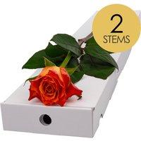 2 Classic Orange Roses