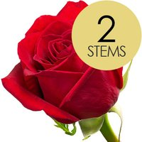 2 Classic Bright Red Freedom Roses