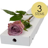 3 Classic Lilac Roses