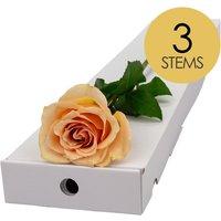 3 Classic Peach Roses