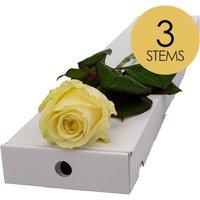 3 Classic White Roses