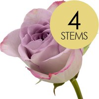 4 Classic Lilac Roses