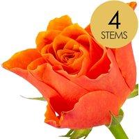 4 Classic Orange Roses