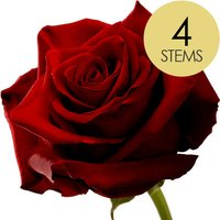 4 Classic Large Headed Red Naomi Roses