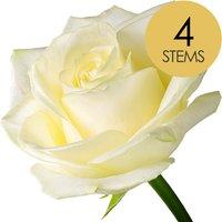 4 Classic White Roses