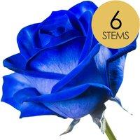 6 Classic Blue Roses