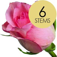 6 Classic Pink Roses